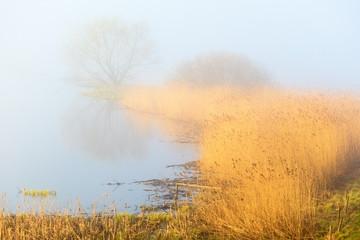 Misty spring morning lake