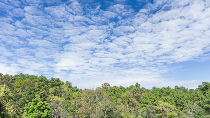 Time lapse of clouds move over green forest