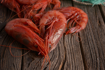 Camarón Shrimp Gambero rosso