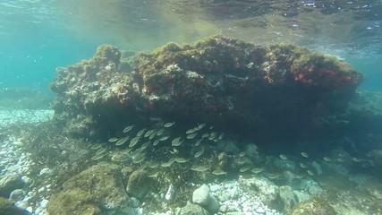 Pesci che volteggiano sott'acqua