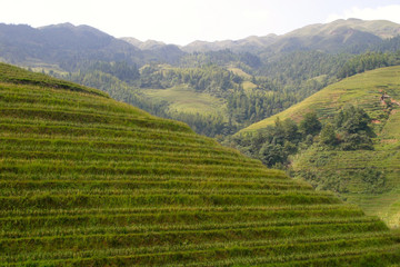 Rice terraced in Northern Vietnam