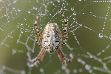Un ragno scattato in macro
