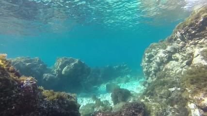 Fondale roccioso con pesci