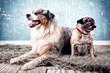 canvas print picture - 2 Hunde zusammen