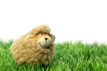 Schaf auf Wiese - Textfreiraum