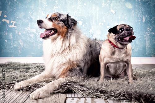 canvas print picture 2 Hunde zusammen