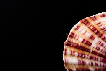 Seashell on the old black shabby background