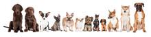 "Постер, картина, фотообои ""group of dogs"""
