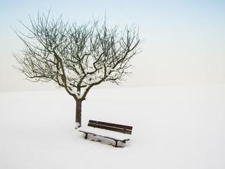 wundervolle Winterlandschaft 14, Apfelbaum und Bank