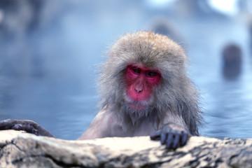 Bathing Snow Monkey