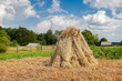 Rural summer landscape in summer sunny day