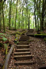 Steps of wooden stair in the forest