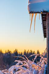 Icicles on sunrise