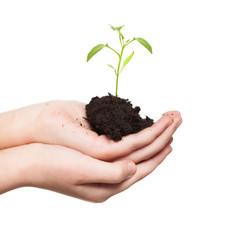 Sprout in children's hands