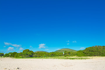 green trees and sand under a blue sky