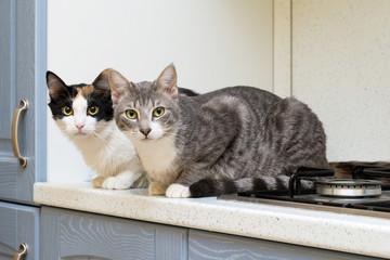 Due gattini accovacciati su ripiano