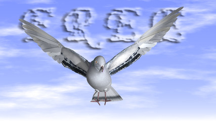Free Dove in the air with wings wide open