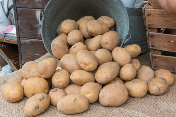 brown potatoes rolling out of an old iron bucket over jute texti