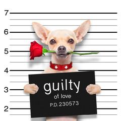 valentines  mugshot dog