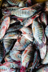 Fresh fish at the fish market in Hurghada. Egypt