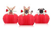 Obrazy na płótnie, fototapety, zdjęcia, fotoobrazy drukowane : valentines dogs