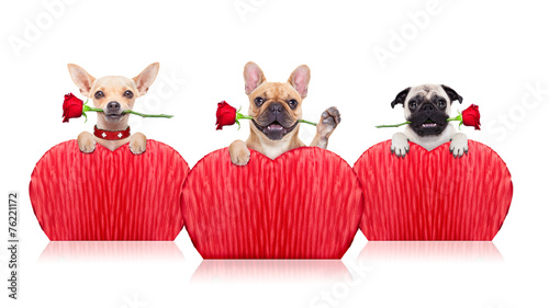 canvas print picture valentines dogs