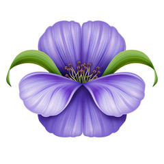 abstract violet flower illustration isolated on white