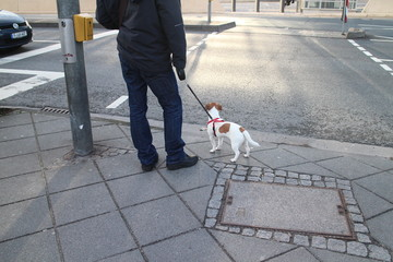 Herrchen mit Hund wartet bei Fussgängerübergang