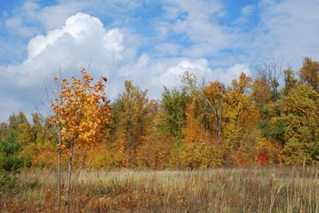 Autumn landscape View 6