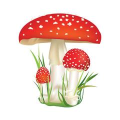 Red poison mushroom isolated on white background.
