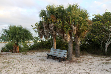 Bench among the palm trees