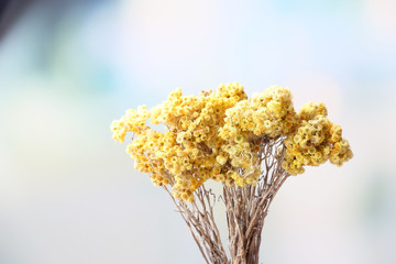 Beautiful dried flowers on bright background