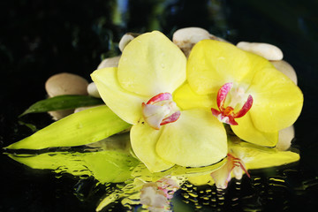 Orchid flowers with water drops and pebble stones