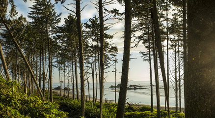 Ruby Beach Forest