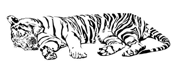 Sleeping Tiger.
