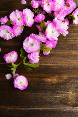 Beautiful fruit blossom on wooden background