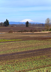 Mt. St. Helens and farm fields Oregon.