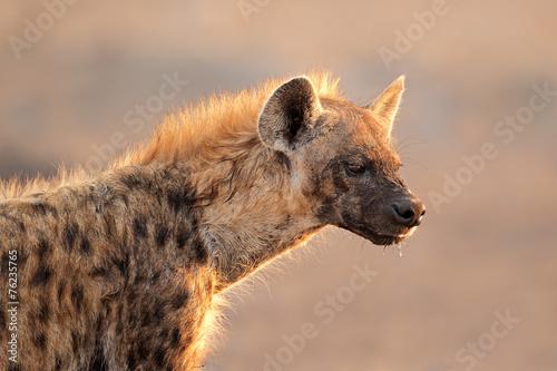 Fotobehang Hyena Spotted hyena portrait, Etosha National Park