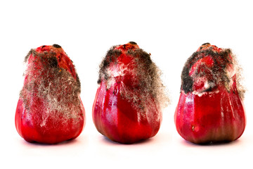 infected Rose apple with mold