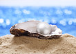 Shell with a pearl. - 76237957
