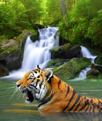 Siberian Tiger in water