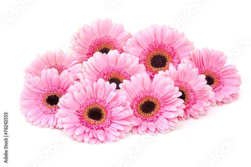 Staande foto Gerbera pink gerbera flowers