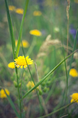 Simple natural background with a detail of a yellow flower