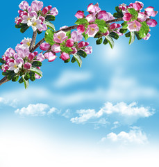 Branch of the cherry blossoms against the blue sky with clouds