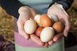 Leinwanddruck Bild - White and  brown eggs