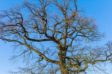 Baum und blauer Himmel
