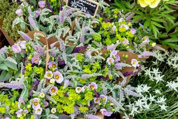 Blumen im Angebot