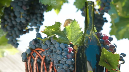 Fresh Grapes In Basket And Bottle Of Wine