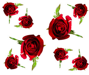 pattern of red rose flower on white background