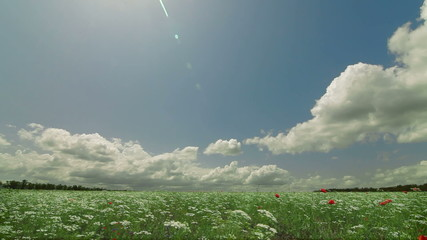 Summer landscape with blooming meadow and fluffy clouds